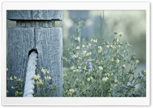Wooden Pole HD Wide Wallpaper for Widescreen