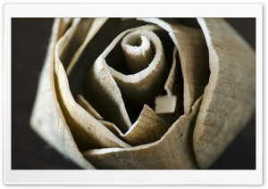 Wooden Rose HD Wide Wallpaper for Widescreen