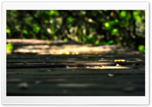 Wooden Walkway HD Wide Wallpaper for Widescreen