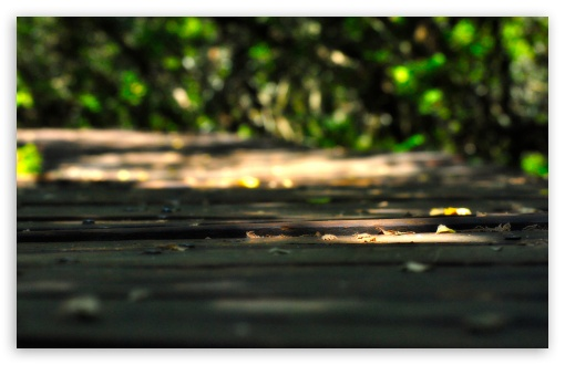 Wooden Walkway HD wallpaper for Wide 16:10 5:3 Widescreen WHXGA WQXGA WUXGA WXGA WGA ; HD 16:9 High Definition WQHD QWXGA 1080p 900p 720p QHD nHD ; Standard 4:3 5:4 3:2 Fullscreen UXGA XGA SVGA QSXGA SXGA DVGA HVGA HQVGA devices ( Apple PowerBook G4 iPhone 4 3G 3GS iPod Touch ) ; Tablet 1:1 ; iPad 1/2/Mini ; Mobile 4:3 5:3 3:2 16:9 5:4 - UXGA XGA SVGA WGA DVGA HVGA HQVGA devices ( Apple PowerBook G4 iPhone 4 3G 3GS iPod Touch ) WQHD QWXGA 1080p 900p 720p QHD nHD QSXGA SXGA ;