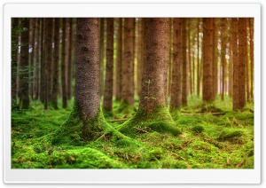 Woodland HD Wide Wallpaper for Widescreen