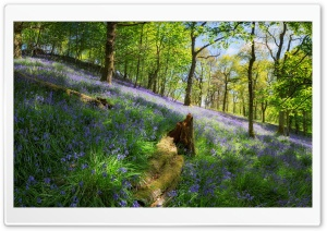 Woodland Spring Flowers HD Wide Wallpaper for Widescreen