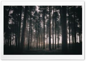 Woodland, Trees, Morning Ultra HD Wallpaper for 4K UHD Widescreen desktop, tablet & smartphone
