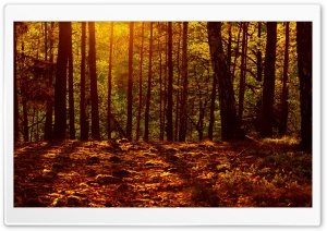 Woods HD Wide Wallpaper for Widescreen