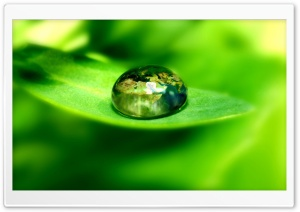 World On A Green Leaf HD Wide Wallpaper for Widescreen
