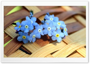 ws Blue Forget me not Flowers  HD Wide Wallpaper for Widescreen