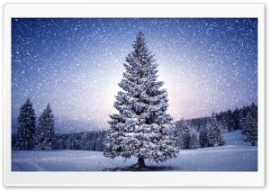 Xmas Tree HD Wide Wallpaper for Widescreen
