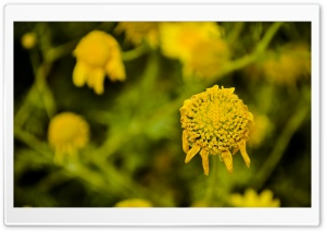 Yellow HD Wide Wallpaper for Widescreen