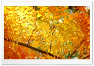 Yellow   Orange Autumn Foliage HD Wide Wallpaper for Widescreen