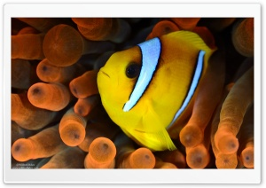 Yellow and White Fish HD Wide Wallpaper for Widescreen