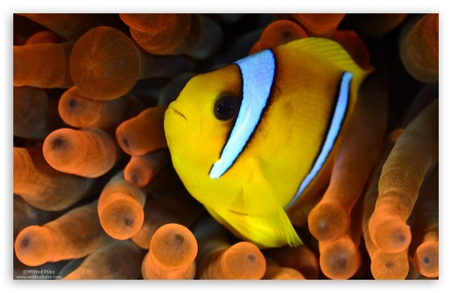 Yellow and White Fish ❤ 4K UHD Wallpaper for Wide 16:10 5:3 Widescreen WHXGA WQXGA WUXGA WXGA WGA ; 4K UHD 16:9 Ultra High Definition 2160p 1440p 1080p 900p 720p ; UHD 16:9 2160p 1440p 1080p 900p 720p ; Standard 4:3 3:2 Fullscreen UXGA XGA SVGA DVGA HVGA HQVGA ( Apple PowerBook G4 iPhone 4 3G 3GS iPod Touch ) ; iPad 1/2/Mini ; Mobile 4:3 5:3 3:2 16:9 - UXGA XGA SVGA WGA DVGA HVGA HQVGA ( Apple PowerBook G4 iPhone 4 3G 3GS iPod Touch ) 2160p 1440p 1080p 900p 720p ;
