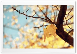 Yellow Autumn HD Wide Wallpaper for Widescreen