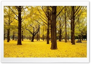 Yellow Autumn in Japan HD Wide Wallpaper for Widescreen