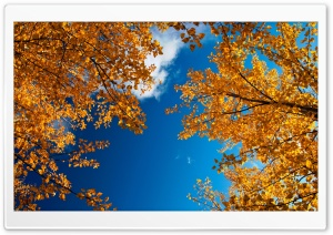 Yellow Autumn Trees HD Wide Wallpaper for 4K UHD Widescreen desktop & smartphone