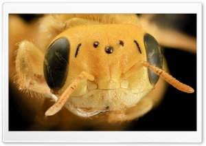 Yellow Bee Head Macro HD Wide Wallpaper for Widescreen