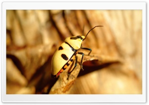 Yellow Bug HD Wide Wallpaper for Widescreen
