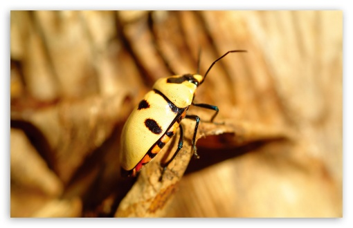 Yellow Bug UltraHD Wallpaper for Wide 16:10 5:3 Widescreen WHXGA WQXGA WUXGA WXGA WGA ; 8K UHD TV 16:9 Ultra High Definition 2160p 1440p 1080p 900p 720p ; Standard 4:3 5:4 3:2 Fullscreen UXGA XGA SVGA QSXGA SXGA DVGA HVGA HQVGA ( Apple PowerBook G4 iPhone 4 3G 3GS iPod Touch ) ; Tablet 1:1 ; iPad 1/2/Mini ; Mobile 4:3 5:3 3:2 16:9 5:4 - UXGA XGA SVGA WGA DVGA HVGA HQVGA ( Apple PowerBook G4 iPhone 4 3G 3GS iPod Touch ) 2160p 1440p 1080p 900p 720p QSXGA SXGA ;