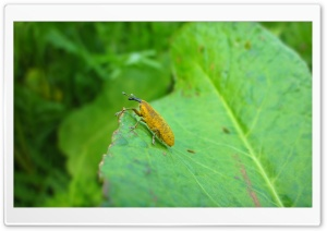 Yellow Bug on a Leaf HD Wide Wallpaper for Widescreen