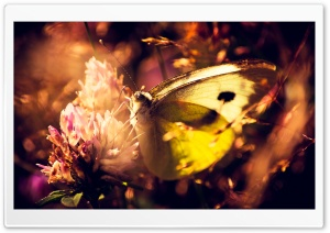 Yellow Butterfly HD Wide Wallpaper for 4K UHD Widescreen desktop & smartphone