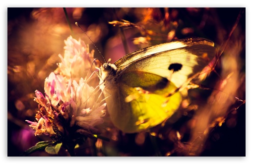 Yellow Butterfly HD wallpaper for Wide 16:10 5:3 Widescreen WHXGA WQXGA WUXGA WXGA WGA ; HD 16:9 High Definition WQHD QWXGA 1080p 900p 720p QHD nHD ; Standard 4:3 5:4 3:2 Fullscreen UXGA XGA SVGA QSXGA SXGA DVGA HVGA HQVGA devices ( Apple PowerBook G4 iPhone 4 3G 3GS iPod Touch ) ; iPad 1/2/Mini ; Mobile 4:3 5:3 3:2 16:9 5:4 - UXGA XGA SVGA WGA DVGA HVGA HQVGA devices ( Apple PowerBook G4 iPhone 4 3G 3GS iPod Touch ) WQHD QWXGA 1080p 900p 720p QHD nHD QSXGA SXGA ;