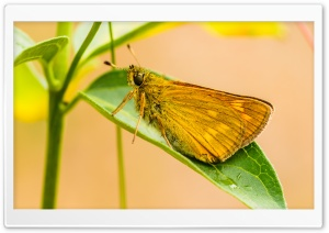 Yellow Butterfly HD Wide Wallpaper for Widescreen