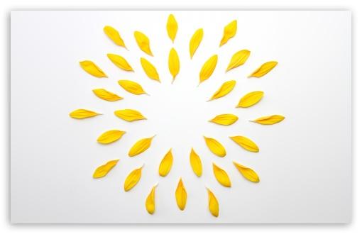 Yellow Corolla Petals Flower ❤ 4K UHD Wallpaper for Wide 16:10 5:3 Widescreen WHXGA WQXGA WUXGA WXGA WGA ; 4K UHD 16:9 Ultra High Definition 2160p 1440p 1080p 900p 720p ; UHD 16:9 2160p 1440p 1080p 900p 720p ; Standard 4:3 5:4 3:2 Fullscreen UXGA XGA SVGA QSXGA SXGA DVGA HVGA HQVGA ( Apple PowerBook G4 iPhone 4 3G 3GS iPod Touch ) ; Smartphone 3:2 5:3 DVGA HVGA HQVGA ( Apple PowerBook G4 iPhone 4 3G 3GS iPod Touch ) WGA ; Tablet 1:1 ; iPad 1/2/Mini ; Mobile 4:3 5:3 3:2 16:9 5:4 - UXGA XGA SVGA WGA DVGA HVGA HQVGA ( Apple PowerBook G4 iPhone 4 3G 3GS iPod Touch ) 2160p 1440p 1080p 900p 720p QSXGA SXGA ;