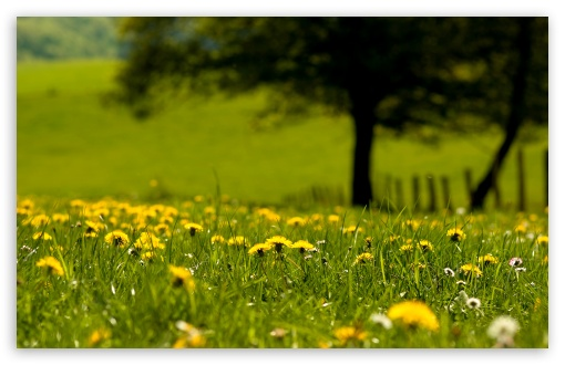 Yellow Dandelions Field HD wallpaper for Wide 16:10 5:3 Widescreen WHXGA WQXGA WUXGA WXGA WGA ; HD 16:9 High Definition WQHD QWXGA 1080p 900p 720p QHD nHD ; Standard 4:3 5:4 3:2 Fullscreen UXGA XGA SVGA QSXGA SXGA DVGA HVGA HQVGA devices ( Apple PowerBook G4 iPhone 4 3G 3GS iPod Touch ) ; Tablet 1:1 ; iPad 1/2/Mini ; Mobile 4:3 5:3 3:2 16:9 5:4 - UXGA XGA SVGA WGA DVGA HVGA HQVGA devices ( Apple PowerBook G4 iPhone 4 3G 3GS iPod Touch ) WQHD QWXGA 1080p 900p 720p QHD nHD QSXGA SXGA ;