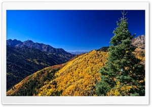 Yellow Deciduous Mountain Forests HD Wide Wallpaper for Widescreen