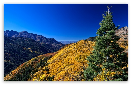 Yellow Deciduous Mountain Forests HD wallpaper for Wide 16:10 5:3 Widescreen WHXGA WQXGA WUXGA WXGA WGA ; HD 16:9 High Definition WQHD QWXGA 1080p 900p 720p QHD nHD ; Standard 4:3 5:4 3:2 Fullscreen UXGA XGA SVGA QSXGA SXGA DVGA HVGA HQVGA devices ( Apple PowerBook G4 iPhone 4 3G 3GS iPod Touch ) ; Tablet 1:1 ; iPad 1/2/Mini ; Mobile 4:3 5:3 3:2 16:9 5:4 - UXGA XGA SVGA WGA DVGA HVGA HQVGA devices ( Apple PowerBook G4 iPhone 4 3G 3GS iPod Touch ) WQHD QWXGA 1080p 900p 720p QHD nHD QSXGA SXGA ;