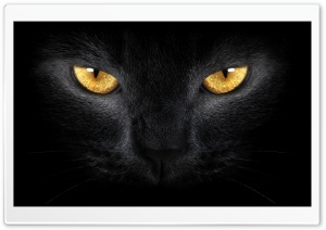 Yellow Eyes HD Wide Wallpaper for Widescreen