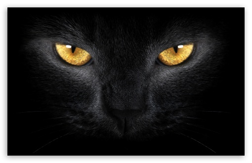 Yellow Eyes ❤ 4K UHD Wallpaper for Wide 16:10 5:3 Widescreen WHXGA WQXGA WUXGA WXGA WGA ; UltraWide 21:9 ; 4K UHD 16:9 Ultra High Definition 2160p 1440p 1080p 900p 720p ; Standard 4:3 5:4 3:2 Fullscreen UXGA XGA SVGA QSXGA SXGA DVGA HVGA HQVGA ( Apple PowerBook G4 iPhone 4 3G 3GS iPod Touch ) ; Smartphone 16:9 3:2 5:3 2160p 1440p 1080p 900p 720p DVGA HVGA HQVGA ( Apple PowerBook G4 iPhone 4 3G 3GS iPod Touch ) WGA ; Tablet 1:1 ; iPad 1/2/Mini ; Mobile 4:3 5:3 3:2 16:9 5:4 - UXGA XGA SVGA WGA DVGA HVGA HQVGA ( Apple PowerBook G4 iPhone 4 3G 3GS iPod Touch ) 2160p 1440p 1080p 900p 720p QSXGA SXGA ; Dual 16:10 5:3 16:9 4:3 5:4 3:2 WHXGA WQXGA WUXGA WXGA WGA 2160p 1440p 1080p 900p 720p UXGA XGA SVGA QSXGA SXGA DVGA HVGA HQVGA ( Apple PowerBook G4 iPhone 4 3G 3GS iPod Touch ) ;
