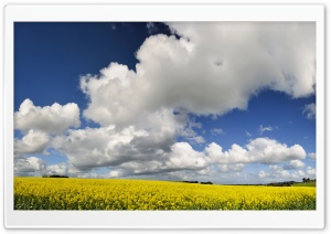Yellow Field HD Wide Wallpaper for 4K UHD Widescreen desktop & smartphone