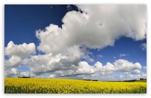 Yellow Field HD wallpaper for Wide 16:10 5:3 Widescreen WHXGA WQXGA WUXGA WXGA WGA ; HD 16:9 High Definition WQHD QWXGA 1080p 900p 720p QHD nHD ; Standard 4:3 5:4 3:2 Fullscreen UXGA XGA SVGA QSXGA SXGA DVGA HVGA HQVGA devices ( Apple PowerBook G4 iPhone 4 3G 3GS iPod Touch ) ; Tablet 1:1 ; iPad 1/2/Mini ; Mobile 4:3 5:3 3:2 16:9 5:4 - UXGA XGA SVGA WGA DVGA HVGA HQVGA devices ( Apple PowerBook G4 iPhone 4 3G 3GS iPod Touch ) WQHD QWXGA 1080p 900p 720p QHD nHD QSXGA SXGA ; Dual 16:10 5:3 4:3 5:4 WHXGA WQXGA WUXGA WXGA WGA UXGA XGA SVGA QSXGA SXGA ;