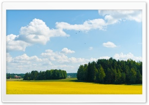 Yellow Fields HD Wide Wallpaper for Widescreen