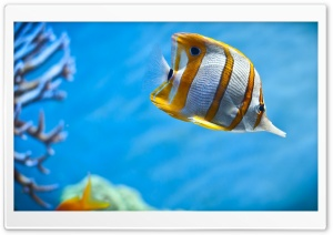 Yellow Fish HD Wide Wallpaper for Widescreen