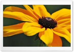 Yellow Flower Ultra HD Wallpaper for 4K UHD Widescreen desktop, tablet & smartphone