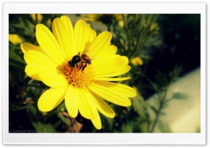Yellow Flower HD Wide Wallpaper for Widescreen