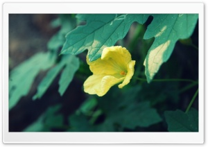 Yellow Flower & Green Leaves HD Wide Wallpaper for Widescreen