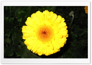 Yellow Flower, Ali Malekpour HD Wide Wallpaper for Widescreen