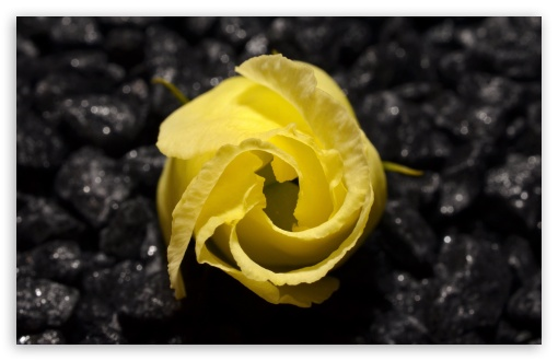 Yellow Flower Black Background ❤ 4K UHD Wallpaper for Wide 16:10 5:3 Widescreen WHXGA WQXGA WUXGA WXGA WGA ; 4K UHD 16:9 Ultra High Definition 2160p 1440p 1080p 900p 720p ; UHD 16:9 2160p 1440p 1080p 900p 720p ; Standard 4:3 5:4 3:2 Fullscreen UXGA XGA SVGA QSXGA SXGA DVGA HVGA HQVGA ( Apple PowerBook G4 iPhone 4 3G 3GS iPod Touch ) ; Smartphone 5:3 WGA ; Tablet 1:1 ; iPad 1/2/Mini ; Mobile 4:3 5:3 3:2 16:9 5:4 - UXGA XGA SVGA WGA DVGA HVGA HQVGA ( Apple PowerBook G4 iPhone 4 3G 3GS iPod Touch ) 2160p 1440p 1080p 900p 720p QSXGA SXGA ;