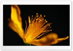 Yellow Flower Macro HD Wide Wallpaper for Widescreen