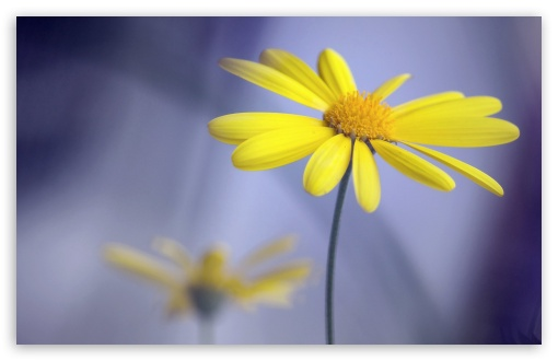 Yellow Flower With Stem ❤ 4K UHD Wallpaper for Wide 16:10 5:3 Widescreen WHXGA WQXGA WUXGA WXGA WGA ; 4K UHD 16:9 Ultra High Definition 2160p 1440p 1080p 900p 720p ; Standard 4:3 5:4 3:2 Fullscreen UXGA XGA SVGA QSXGA SXGA DVGA HVGA HQVGA ( Apple PowerBook G4 iPhone 4 3G 3GS iPod Touch ) ; Smartphone 5:3 WGA ; Tablet 1:1 ; iPad 1/2/Mini ; Mobile 4:3 5:3 3:2 16:9 5:4 - UXGA XGA SVGA WGA DVGA HVGA HQVGA ( Apple PowerBook G4 iPhone 4 3G 3GS iPod Touch ) 2160p 1440p 1080p 900p 720p QSXGA SXGA ; Dual 16:10 5:3 16:9 4:3 5:4 WHXGA WQXGA WUXGA WXGA WGA 2160p 1440p 1080p 900p 720p UXGA XGA SVGA QSXGA SXGA ;