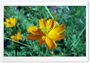 Yellow Flowers Ultra HD Wallpaper for 4K UHD Widescreen desktop, tablet & smartphone