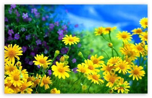 Yellow Flowers ❤ 4K UHD Wallpaper for Wide 16:10 Widescreen WHXGA WQXGA WUXGA WXGA ; 4K UHD 16:9 Ultra High Definition 2160p 1440p 1080p 900p 720p ; Standard 4:3 Fullscreen UXGA XGA SVGA ; Smartphone 16:9 3:2 5:3 2160p 1440p 1080p 900p 720p DVGA HVGA HQVGA ( Apple PowerBook G4 iPhone 4 3G 3GS iPod Touch ) WGA ; Tablet 1:1 ; iPad 1/2/Mini ; Mobile 4:3 5:3 3:2 16:9 5:4 - UXGA XGA SVGA WGA DVGA HVGA HQVGA ( Apple PowerBook G4 iPhone 4 3G 3GS iPod Touch ) 2160p 1440p 1080p 900p 720p QSXGA SXGA ;
