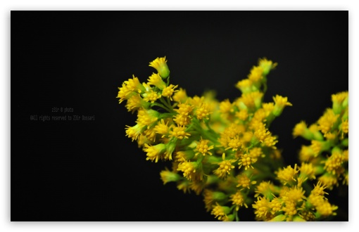 Yellow Flowers HD wallpaper for Wide 16:10 5:3 Widescreen WHXGA WQXGA WUXGA WXGA WGA ; HD 16:9 High Definition WQHD QWXGA 1080p 900p 720p QHD nHD ; Standard 4:3 5:4 3:2 Fullscreen UXGA XGA SVGA QSXGA SXGA DVGA HVGA HQVGA devices ( Apple PowerBook G4 iPhone 4 3G 3GS iPod Touch ) ; Tablet 1:1 ; iPad 1/2/Mini ; Mobile 4:3 5:3 3:2 16:9 5:4 - UXGA XGA SVGA WGA DVGA HVGA HQVGA devices ( Apple PowerBook G4 iPhone 4 3G 3GS iPod Touch ) WQHD QWXGA 1080p 900p 720p QHD nHD QSXGA SXGA ; Dual 5:4 QSXGA SXGA ;