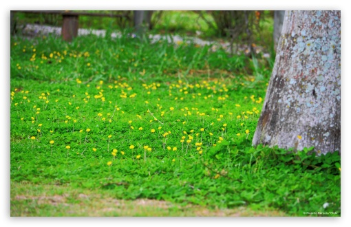 Yellow Flowers HD wallpaper for Wide 16:10 5:3 Widescreen WHXGA WQXGA WUXGA WXGA WGA ; HD 16:9 High Definition WQHD QWXGA 1080p 900p 720p QHD nHD ; Standard 3:2 Fullscreen DVGA HVGA HQVGA devices ( Apple PowerBook G4 iPhone 4 3G 3GS iPod Touch ) ; Mobile 5:3 3:2 - WGA DVGA HVGA HQVGA devices ( Apple PowerBook G4 iPhone 4 3G 3GS iPod Touch ) ;