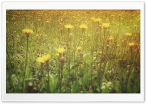 Yellow Flowers HD Wide Wallpaper for Widescreen