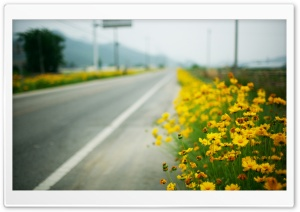 Yellow Flowers Along The Road HD Wide Wallpaper for Widescreen