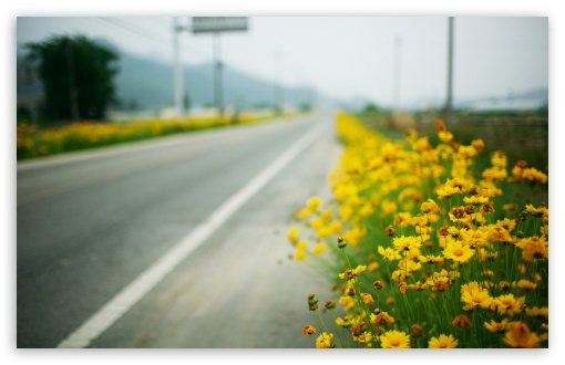 Yellow Flowers Along The Road HD wallpaper for Wide 16:10 5:3 Widescreen WHXGA WQXGA WUXGA WXGA WGA ; HD 16:9 High Definition WQHD QWXGA 1080p 900p 720p QHD nHD ; Standard 4:3 5:4 3:2 Fullscreen UXGA XGA SVGA QSXGA SXGA DVGA HVGA HQVGA devices ( Apple PowerBook G4 iPhone 4 3G 3GS iPod Touch ) ; Tablet 1:1 ; iPad 1/2/Mini ; Mobile 4:3 5:3 3:2 16:9 5:4 - UXGA XGA SVGA WGA DVGA HVGA HQVGA devices ( Apple PowerBook G4 iPhone 4 3G 3GS iPod Touch ) WQHD QWXGA 1080p 900p 720p QHD nHD QSXGA SXGA ; Dual 16:10 5:3 16:9 4:3 5:4 WHXGA WQXGA WUXGA WXGA WGA WQHD QWXGA 1080p 900p 720p QHD nHD UXGA XGA SVGA QSXGA SXGA ;