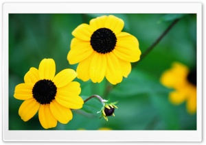 Yellow Flowers and Baby Bloom Ultra HD Wallpaper for 4K UHD Widescreen desktop, tablet & smartphone